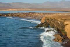 Paracas Nationale Reserve in Peru Royalty-vrije Stock Afbeelding