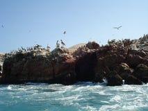 Paracas - Pisco - Перу Стоковое Изображение RF