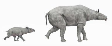 Paraceratherium isolou-se no fundo branco Foto de Stock Royalty Free