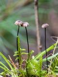 Parachute de crin s'élevant dans la forêt images stock