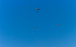 Parachuters en el cielo Imagen de archivo libre de regalías