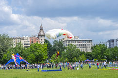 Parachutist jumper landing. Female parachute jumper ready to land on a field in the city at the Red Bull Ordinul Smaranda competition on June 7, 2014 in Royalty Free Stock Images