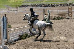Parada del caballo blanco en el obstáculo Imagen de archivo