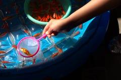 Parada del juego del pez de colores que saca con pala imágenes de archivo libres de regalías