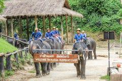 Parada dos elefantes, Chiang Mai, Tailândia Fotografia de Stock Royalty Free