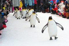 Parada dos pinguins fotografia de stock