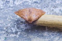 Paradas marrons vermelhas bonitas da borboleta a descansar imagens de stock