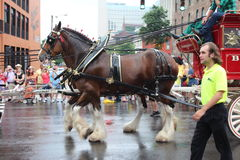 Parade on Broadway in Nashville, Tennessee. Budweiser Horses in Nashville, Tennessee USA - famous Broadway street at the beginning of the parade opening the CMA Royalty Free Stock Photography