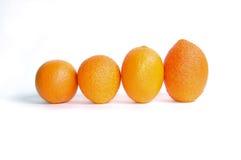 Parade der Orange Lizenzfreies Stockfoto