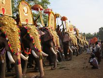 Parade des indischen Elefanten Lizenzfreie Stockbilder