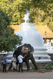 An parade elephant is fed fruit by a man inside the Temple of the Sacred Tooth Relic in Kandy, Sri Lanka. Royalty Free Stock Image