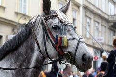 Parade von 70 Teilnehmern, zwanzig Pferde und vierzig Mitglieder der Blaskapelle haben die folgenden 300 Alka angekündigt Stockfoto