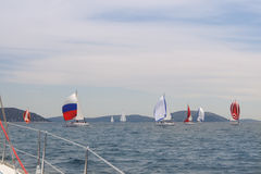 Parade of yachts Stock Image
