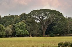 Paradeniya kunglig personbotanisk trädgård Royaltyfri Foto