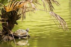 Paradies der Schildkröte Stockfotos