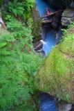 Paradies - Fluss Stockbilder