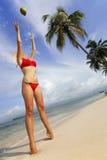 Paradies-Insel stockfotos