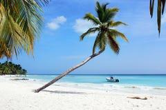 Paradies-Palme Lizenzfreies Stockfoto