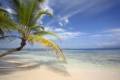 Paradies-Strand mit Kokosnuss-Palme Lizenzfreie Stockfotografie