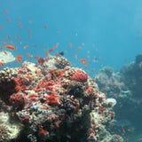 Paradies unter Wasser Stockbild