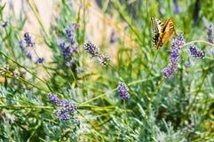 Paradies von Schmetterlingen lizenzfreie stockbilder