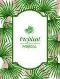 Paradieskarte mit Palmenblättern Tropisches Blatt des dekorativen Bildes von Palme Livistona Rotundifolia Bild für Feiertag Lizenzfreie Stockfotos