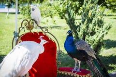 Paradiesvögel lizenzfreie stockfotos