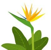 Paradiesvögel Blume-Vektor Stockfotografie
