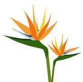Paradiesvögel Blumenschattenbildvektor Stockfoto
