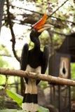 Paradiesvogel Stockfotografie