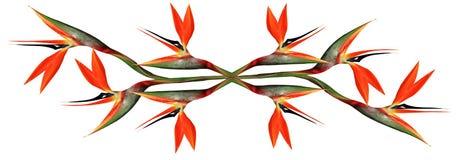 Paradiesvogel Blume widergespiegelt lizenzfreie abbildung