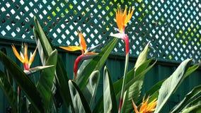 Paradiesvogel Blumen Stockfotografie