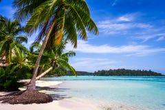 Paradijs tropische strand en lagune in Moorea-Eiland stock afbeeldingen