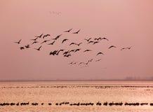 Paradijs van vogels Royalty-vrije Stock Afbeeldingen
