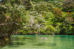 Paradijselijk strand in Abel Tasman in Nieuw Zeeland royalty-vrije stock afbeeldingen