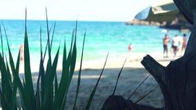 Paradijsstrand en mooie blauwe overzees Turkoois zeewater en zandig strand Groene installaties op tropische strand en oceaan stock videobeelden