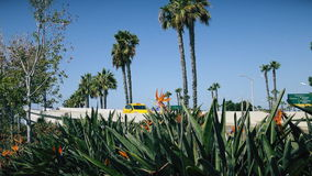Paradijsvogel bloem op de achtergrond van weg stock footage