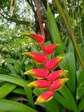Paradijsvogel bloemen bij park stock afbeelding