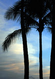 paradis 02 Arkivbild