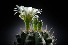 Paradis abstrait d'île de cactus Photos libres de droits