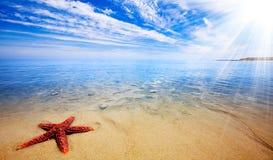 Paradis d'étoiles de mer Image stock