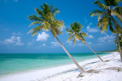 Paradis d'île Photo libre de droits
