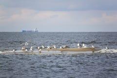 Paradis d'oiseau de réservation sur l'île de Sobieszewo, Pologne Image stock