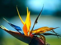 paradis de fleur d'oiseau Photographie stock
