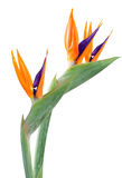 paradis de fleur d'oiseau Images stock