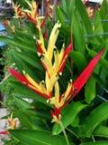 Paradis de fleur d'oiseau Photo libre de droits