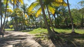 Paradis de palmier Photographie stock