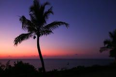 Paradis de palmier Image libre de droits