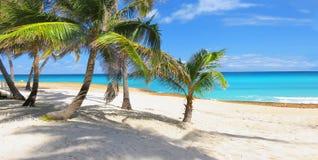 Paradis de palmier dans les Caraïbe Image libre de droits
