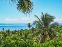 Paradis de Palmtrees photo stock